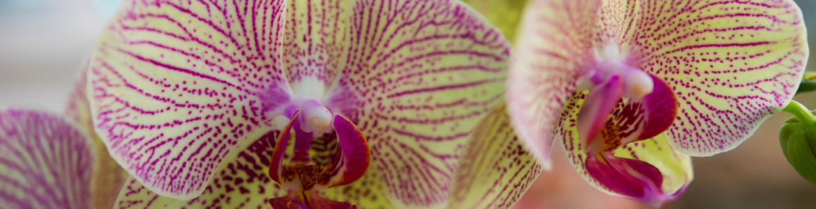 A comprehensive guide to orchids