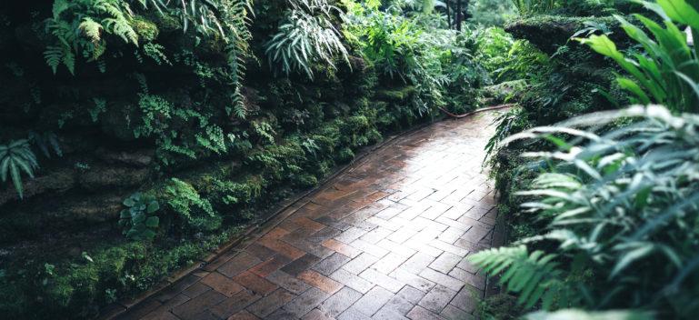 Foliage Plants for Shady Gardens