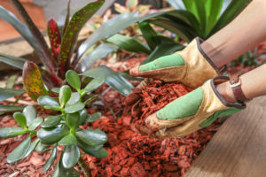 A person applying red bark mulch to their garden while wearing gardening gloves.