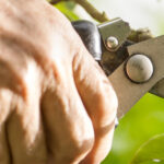 Top 5 February tasks your garden will love you for