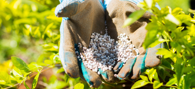 Gardening 101: how much is too much? Overfertilising your plants