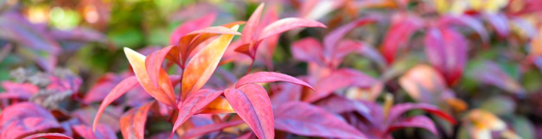 Gardening 101: Tips for the neglectful gardener