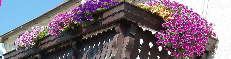 Best flowering plants for balconies