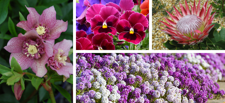 A range of plants for winter flowering colour.