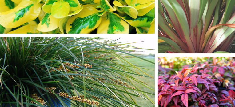 Stunning and colour foliage plants that require minimal care.