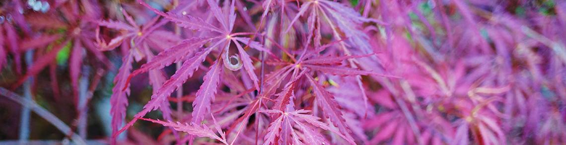 4 essential elements of a Japanese garden design