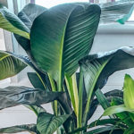 Gardening 101: Winter Indoor Plant Care