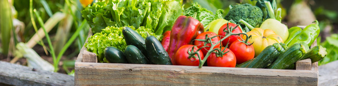 Our top 10 vegetables to plant in spring!