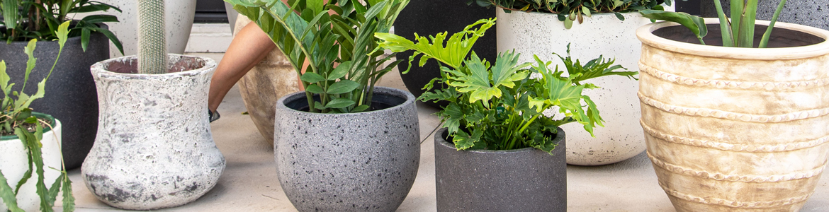 Hardy plants for outdoor pots