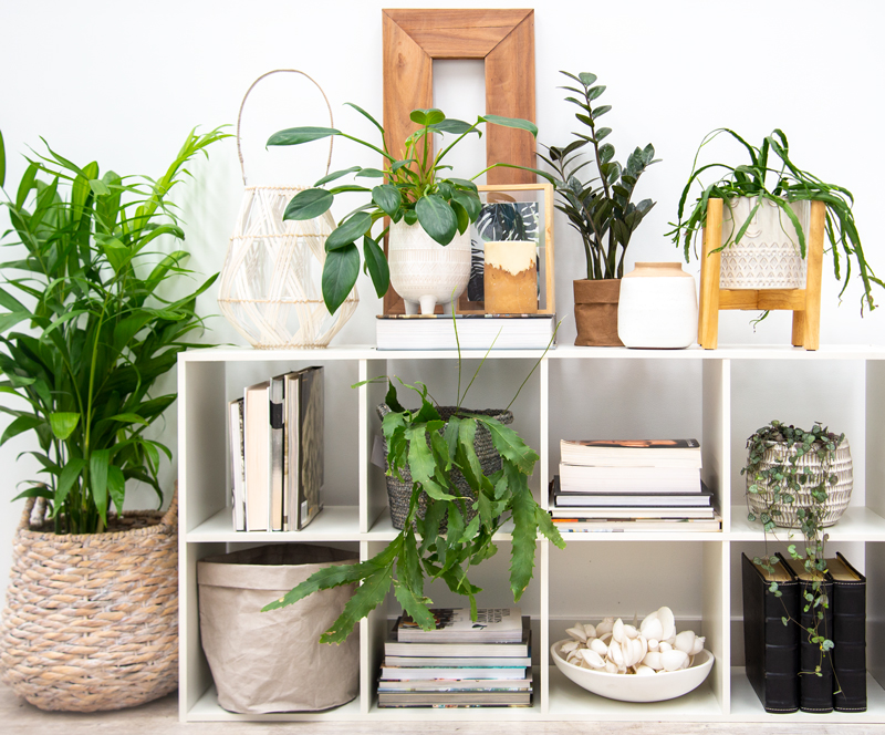Heart Shaped Plant Shelf