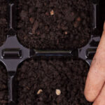 Gardening 101: growing veggies from seed