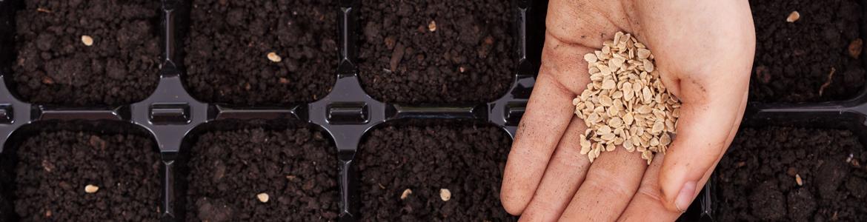 Gardening 101: growing veggies from seed