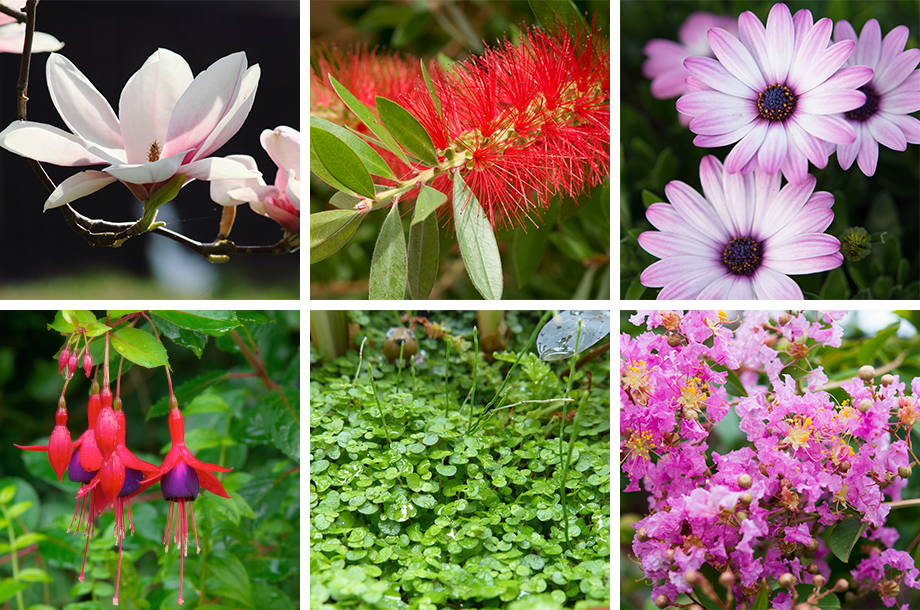 Pet Safe Outdoor Plants Creating A Pet Friendly Garden Flower Power