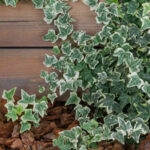 DIY backyard landscaping: five landscaping ideas to create lush outdoor spaces