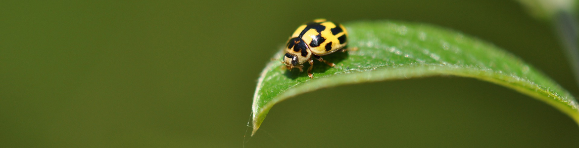 How to identify good bugs in my garden: 7 beneficial insects that help plants