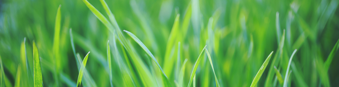 5 easy tips to get your summer lawn back in shape: How to bring your lawn back to life in summer