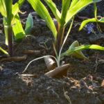 7 steps to veggie garden soil prep