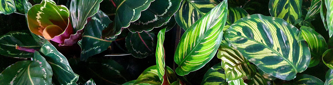 Indoor plant care: How to feed your indoor plants