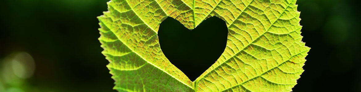 Love your plants: Three ways to show your garden how much you care