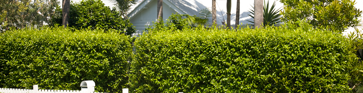 A guide to autumn hedge planting and maintenance for Sydney gardens
