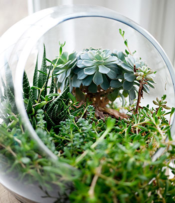 Get to know your terrarium needs