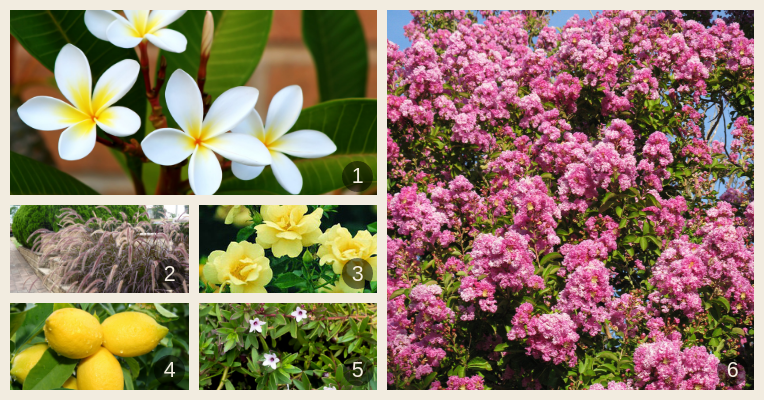 An array of fast-growing groundcover and feature tree species with beautiful flowers and fruit.