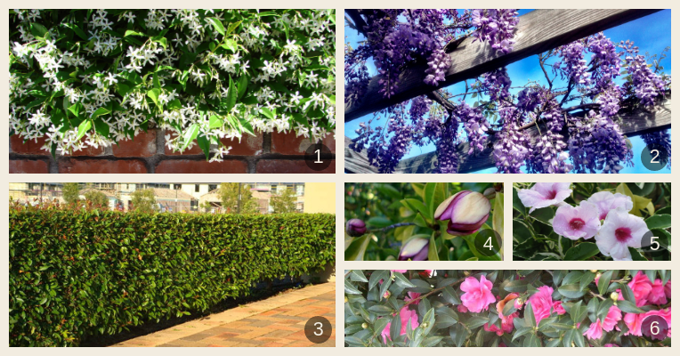 A selection of fast-growing climbers and shrubs in an array of colours and forms.