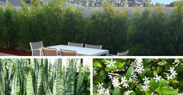 Beautiful green plants perfect for creating a private oasis.