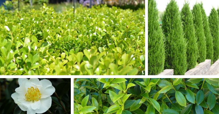 A selection of plants that can be used to make your balcony look and feel more private.