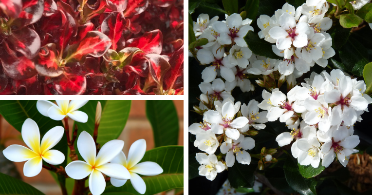 A selection of plants that are fabulous for balcony privacy,