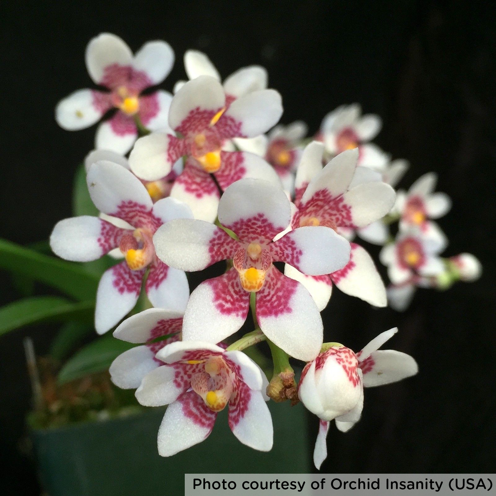 A Comprehensive Guide To Orchids Flower Power